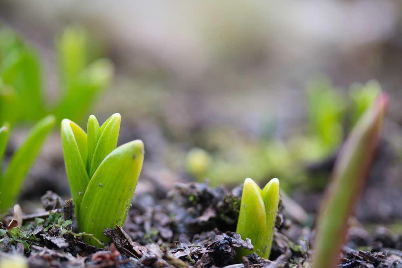 Cebulki kwiatowe, które warto posadzić jesienią
