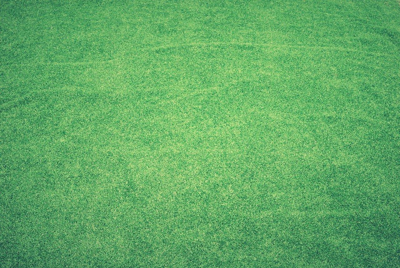 Trawnik marzeń